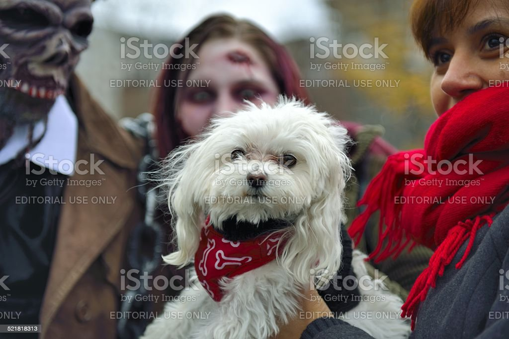 Puppy Surrounded By Zombies To Montreal Zombie Walk Stock