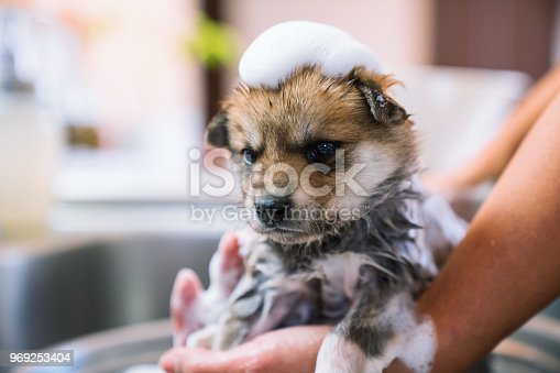 A puppy taking a bath in the kitchen sink
