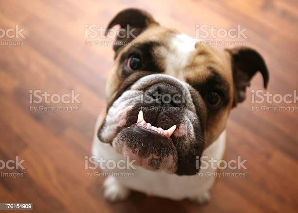 Puppy teeth picture id176154909?b=1&k=6&m=176154909&s=612x612&h=k1ri6towcvvzzsnd3lfbllzwn3iymj49yacmxtyfr6k=