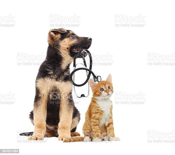 Puppy vet and cat and stethoscope picture id604341084?b=1&k=6&m=604341084&s=612x612&h=pzv20o98sgrq 6f70nmgjaszmncbeiqlscdwswwslgq=