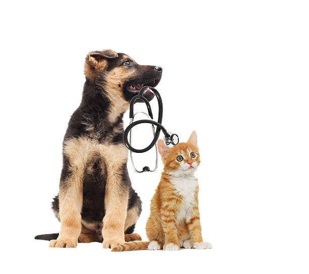 puppy vet and cat and stethoscope – Foto