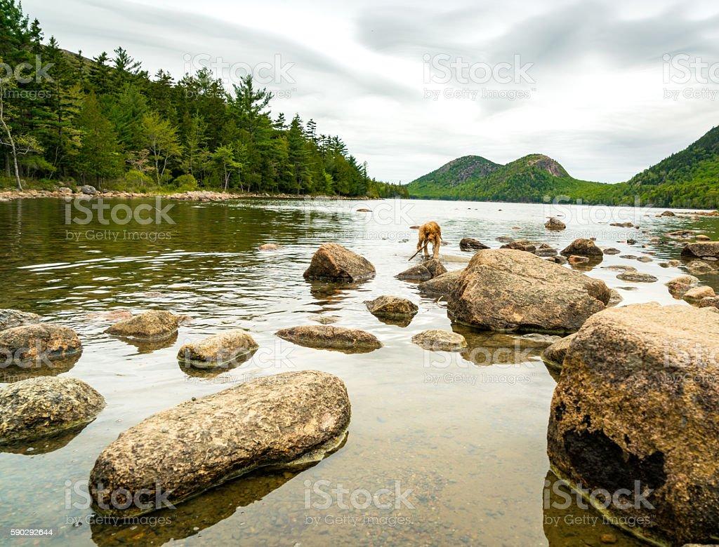 Puppy Walks with Stick in Water under Dramatic Sky royaltyfri bildbanksbilder