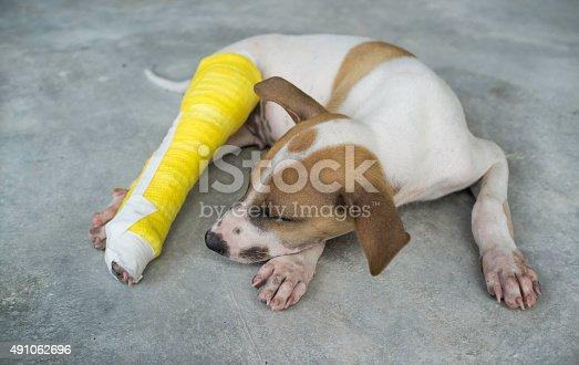 istock Puppy with a broken leg, splint,dog 491062696