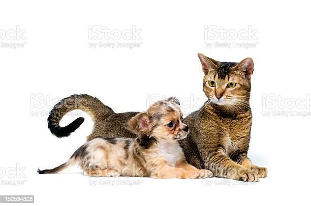Puppy with a cat picture id152534328?b=1&k=6&m=152534328&s=612x612&h=a7  5wwkhcxtn6z199o8gsl4itglaz2wg2urbinmezm=