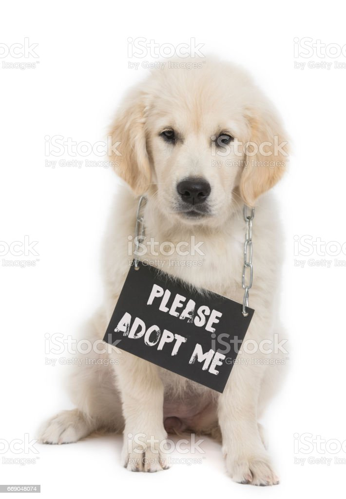 Puppy With Adopt Me Sign stock photo