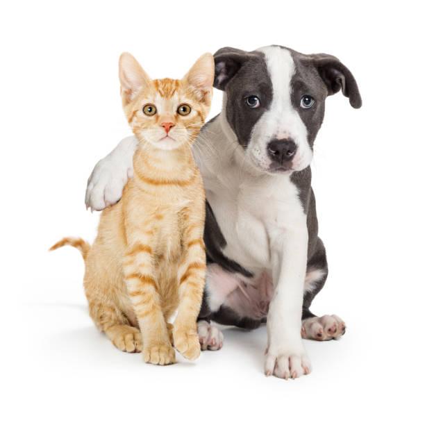 Puppy With Arm Around Cute Kitten stock photo