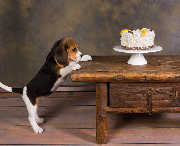 Puppy with cake stock photo