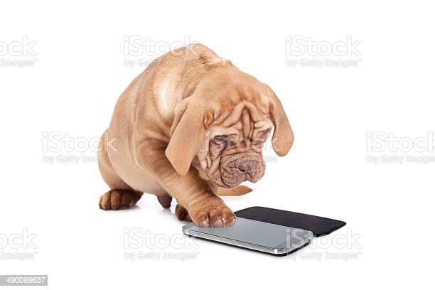Puppy with cellular phone picture id490069637?b=1&k=6&m=490069637&s=612x612&h=abiulnog r dqvwrxbb39qq87uerttwx0lbtbta qkg=