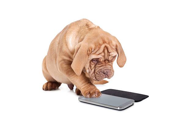 Cachorro con teléfono celular - foto de stock