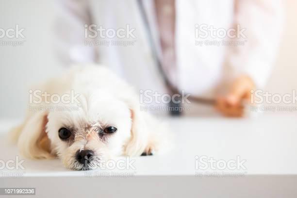 Puppy with doctor picture id1071992336?b=1&k=6&m=1071992336&s=612x612&h=ykvi0kxmpl0ljwmbdt rnhz e0x3gwjodpmqvgm9hwk=
