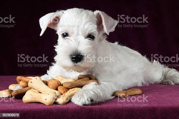 Puppy with dog biscuits bones picture id502909075?b=1&k=6&m=502909075&s=612x612&h=xagb2p9mwezjthencbdu symesyrr4orygmzsw0wuak=