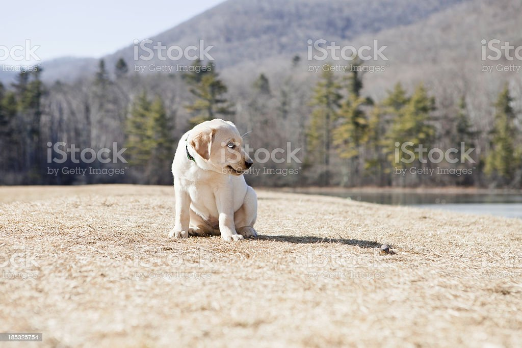 Puppy with Funny Expression royalty-free stock photo