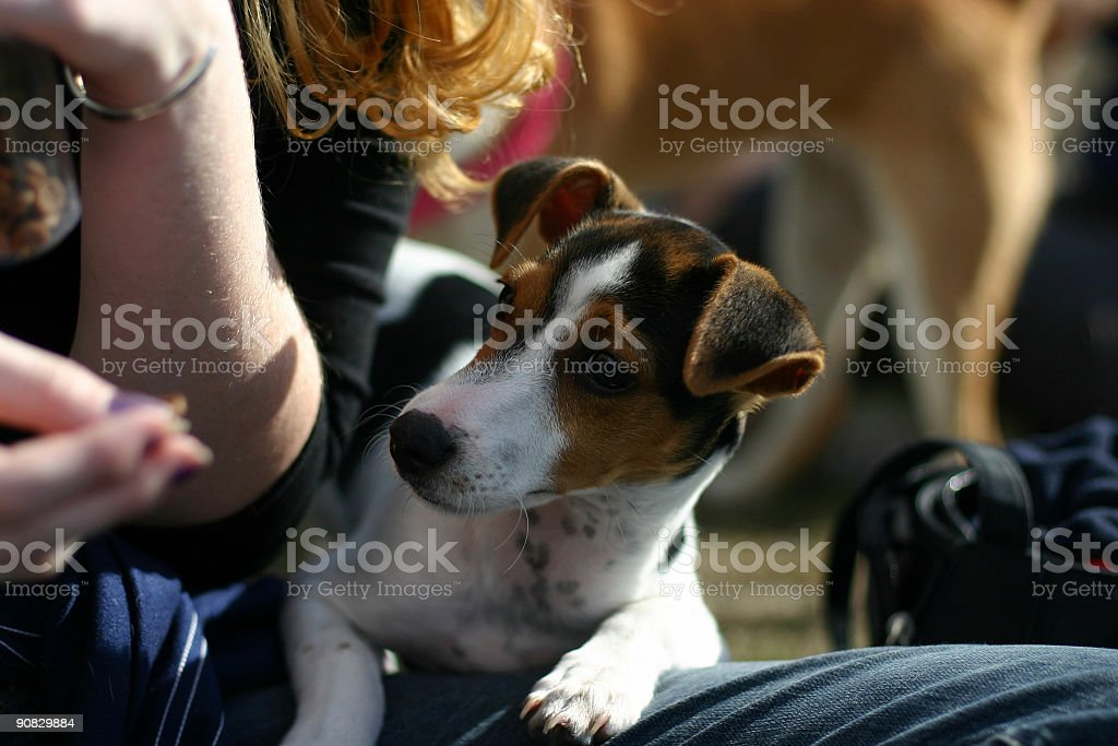 puppy with girl royalty-free stock photo