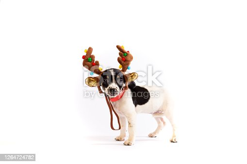 istock Puppy with headband antlers with Christmas decorations 1264724782