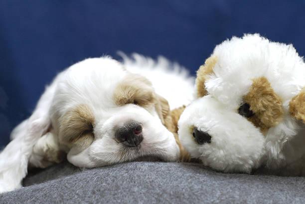 Cachorro con relleno de animal ven semejantes - foto de stock