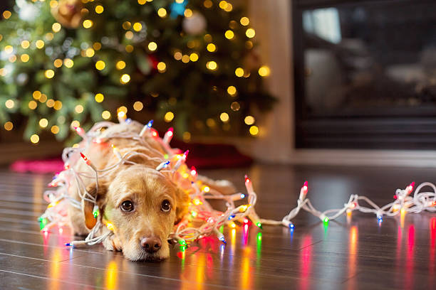 puppy wrapped up in christmas lights - mischief stock photos and pictures