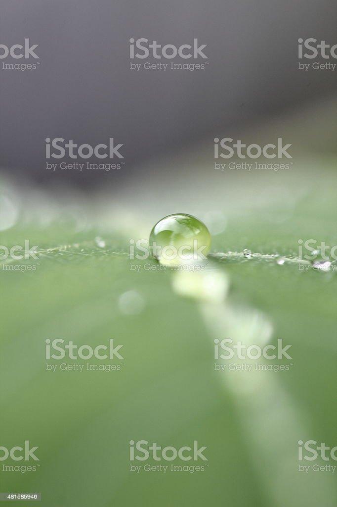 Pure Drop stock photo