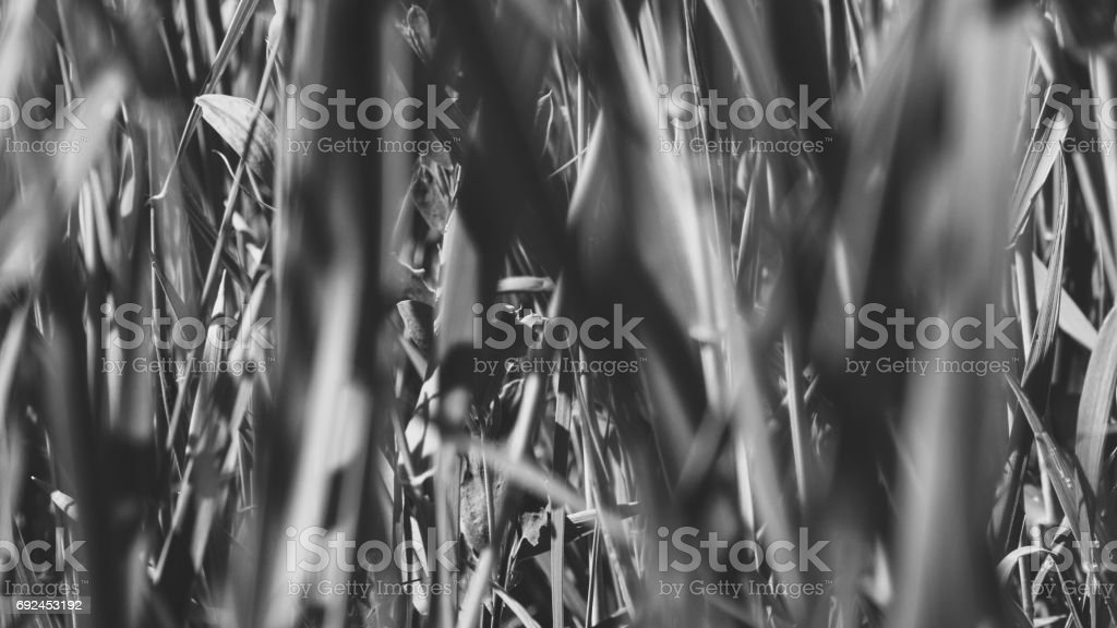 Pure environmental wild vegetable life textured pattern in neutral color overhead shot stock photo
