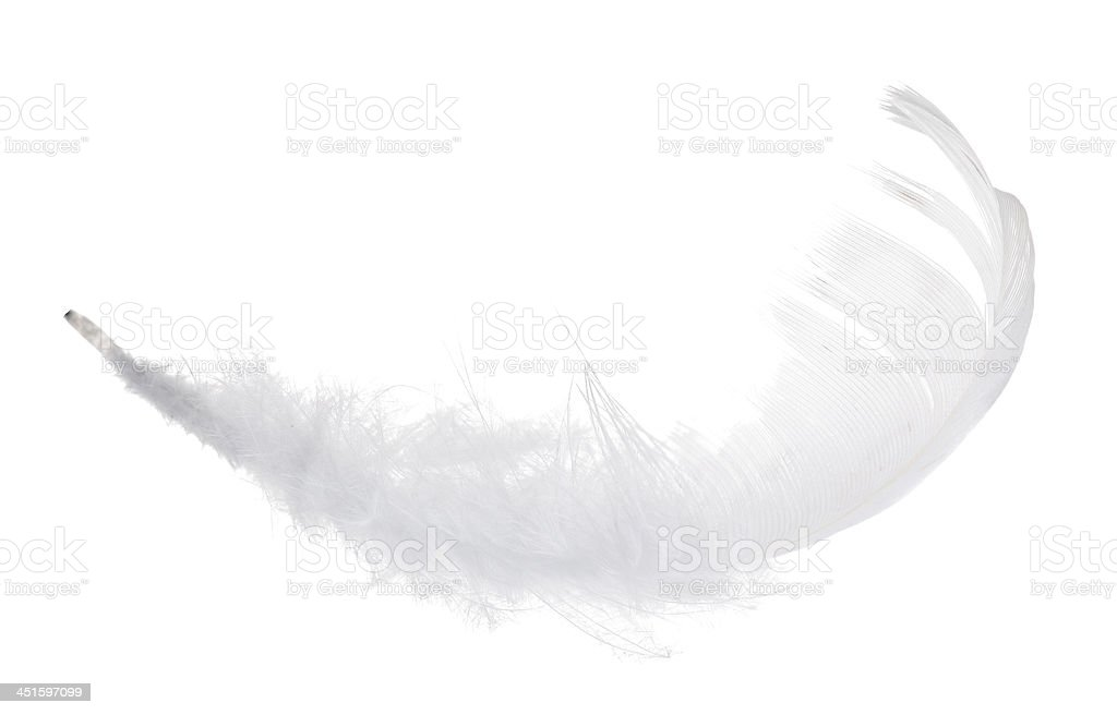 pure isolated white feather stock photo