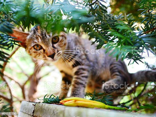 Pure kitten picture id601132330?b=1&k=6&m=601132330&s=612x612&h=qzfkfxwlcuazuow0jmuiyuorcd63zmnz6ljztejvxzy=