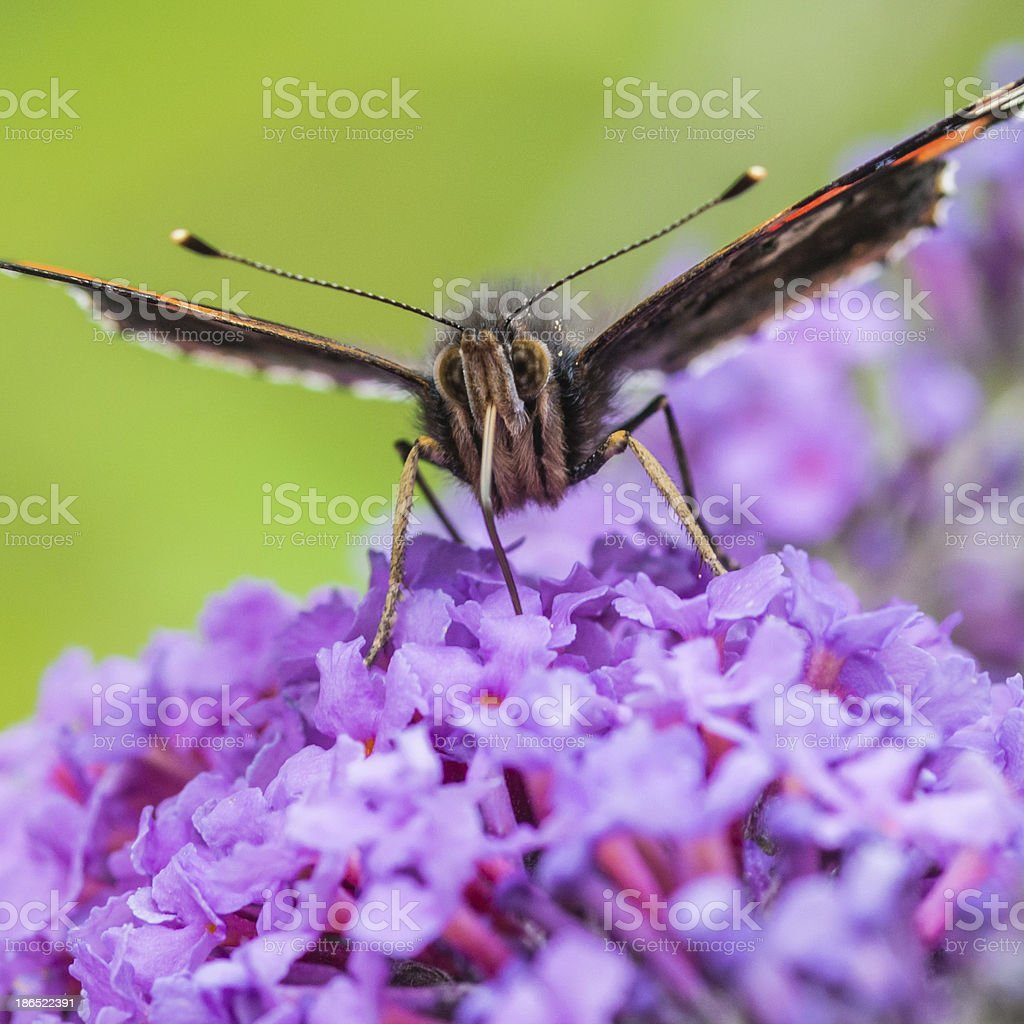 Pure Nectar royalty-free stock photo