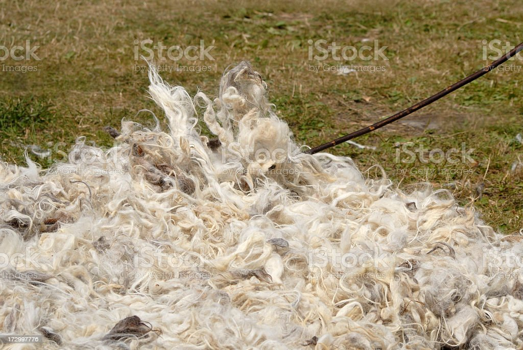 Pure new wool stock photo