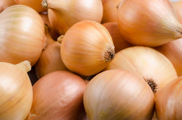 Pure organic raw onion Pure organic raw onion on the background of bulbs. Selective focus. onion stock pictures, royalty-free photos & images
