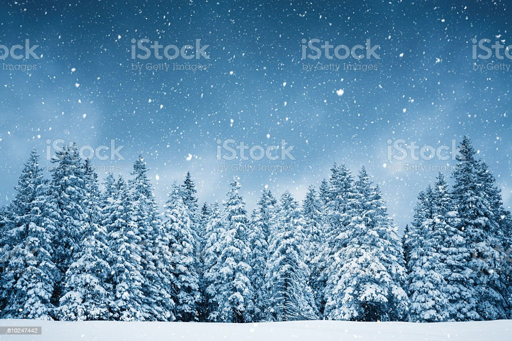 Pure Winter Idyllic snowy winter scene: snowcapped trees with falling snowflakes. Arctic Stock Photo