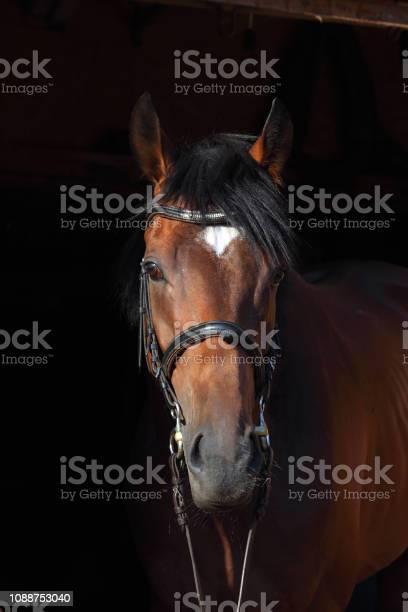 Purebred sports dressage horse portrait in dark stable picture id1088753040?b=1&k=6&m=1088753040&s=612x612&h=txvfrxi7d 3qlz5ymflbkrqtjn5f4egwnk t7qbitlc=