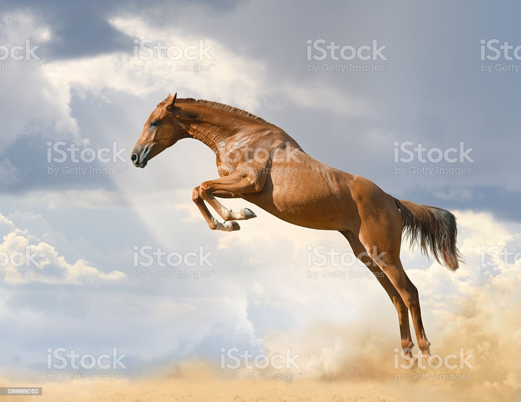 purebred young horse jumping stock photo