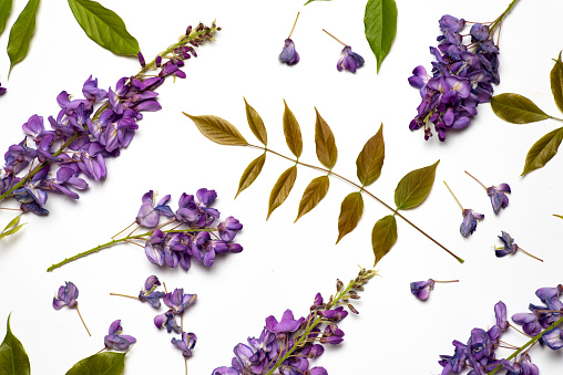 Purple acacia flowers on white background flat lay top view