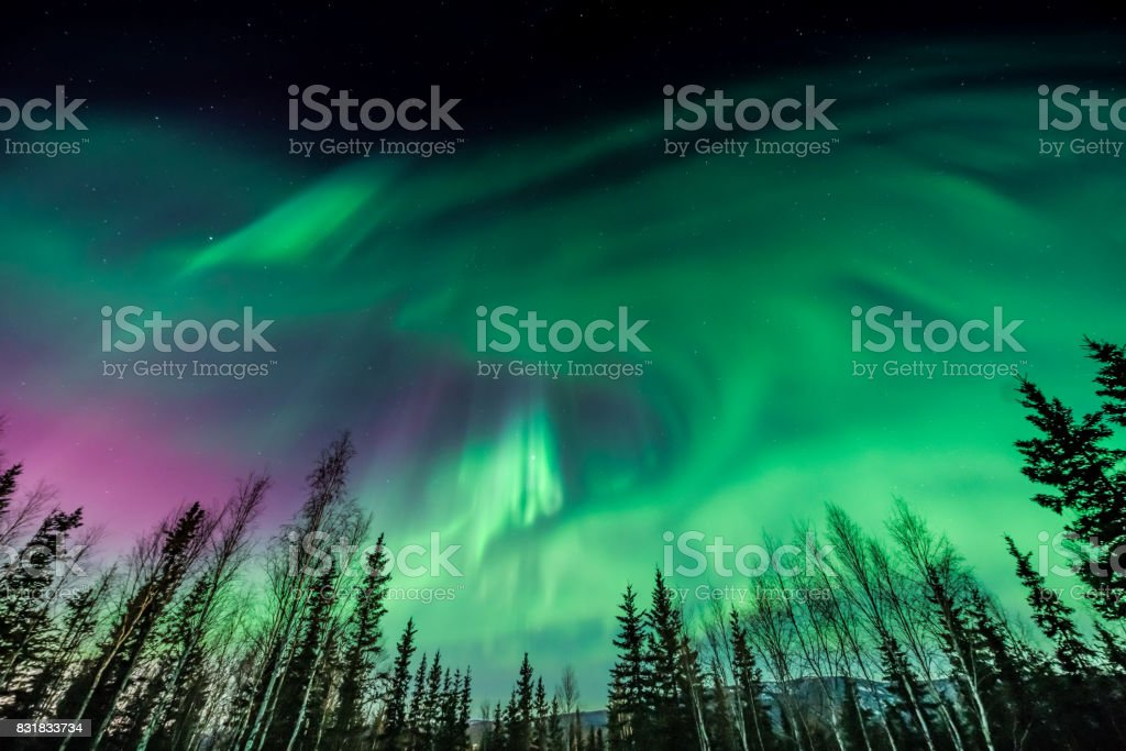 Purple and green Aurora borealis over tree line stock photo