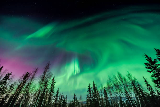 purple and green aurora borealis over tree line - aurora boreale foto e immagini stock