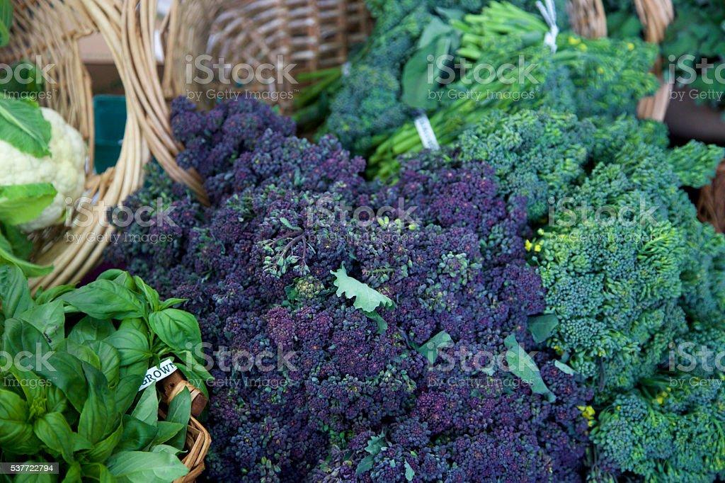 purple and green broccoli stock photo