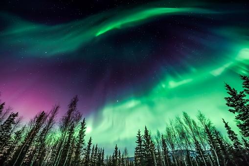Aurora borealis over tree line in Fairbanks, Alaska