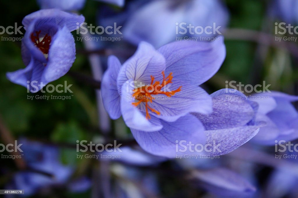 Purple And Orange Flowers At Fall In Norway Stock Photo Download Image Now Istock