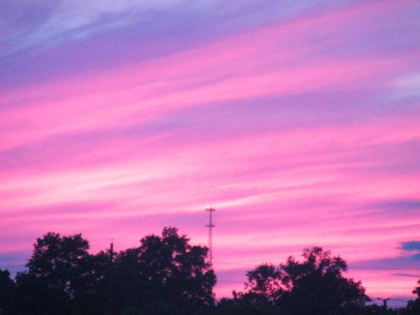 Purple and pink sunset sky over silhouetted trees. stock photo