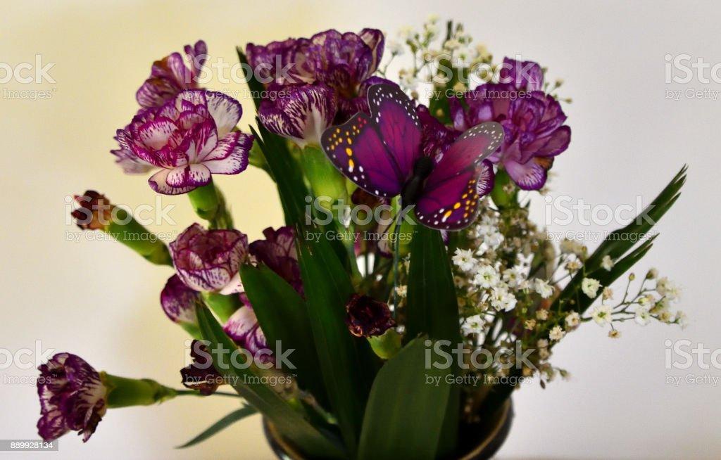 Purple and White Carnation stock photo