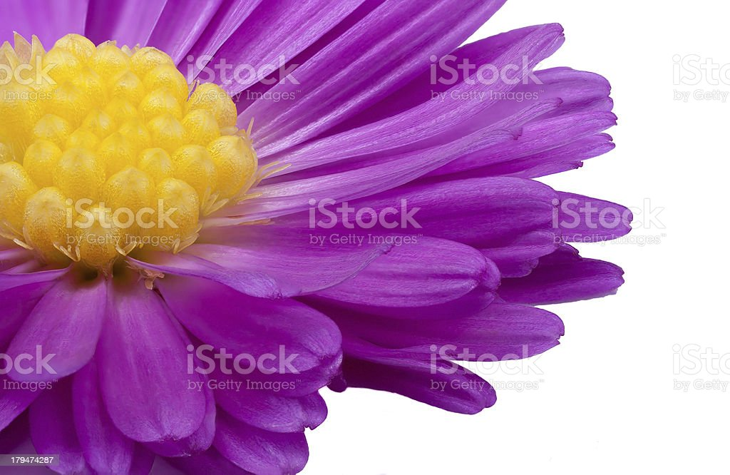 purple and yellow royalty-free stock photo