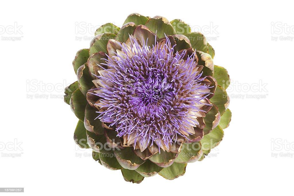 Fleur d'artichauts violets vu de dessus - Photo