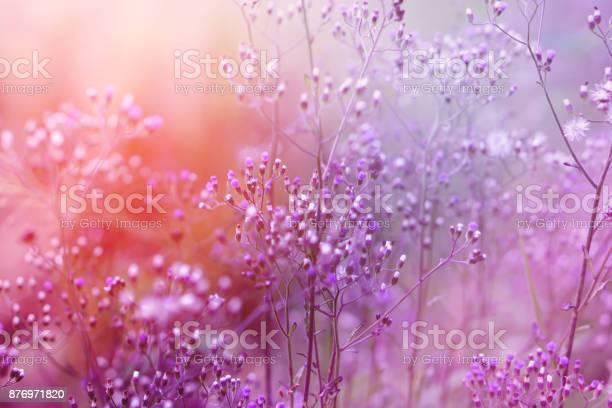 Purple background of grass flower with sunlight romance background picture id876971820?b=1&k=6&m=876971820&s=612x612&h=jgeet0hwxlsoc2lrieps4hrv5sida45kmnvs7m5ks2m=
