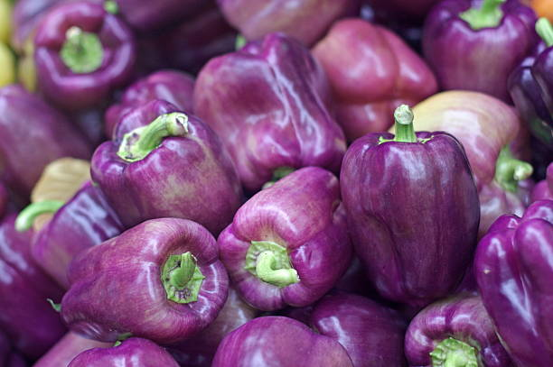 Purple bell peppers stock photo