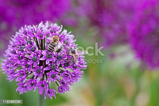 Garden photography Bavaria Germany