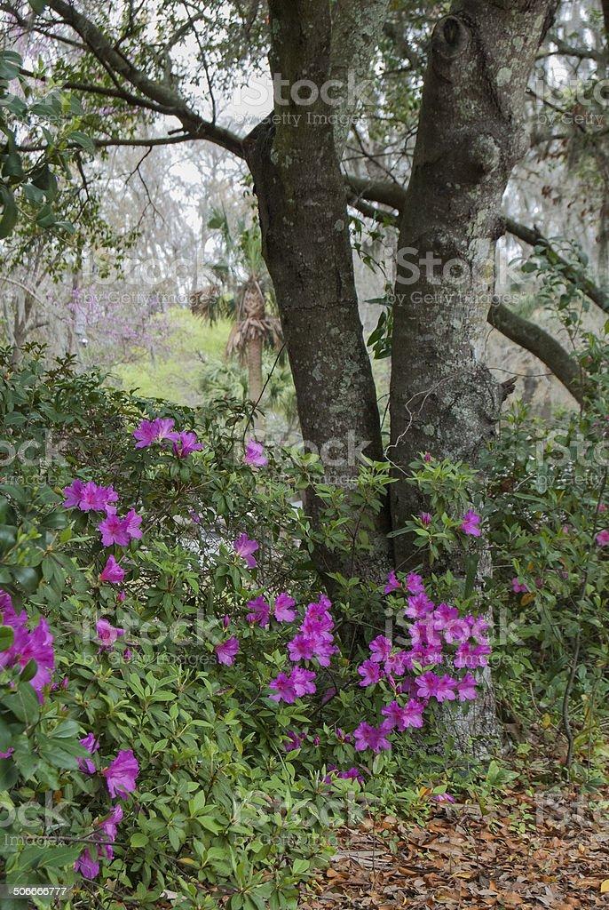 Purple Blossoms stock photo
