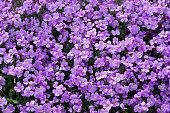 Purple bush plant background
