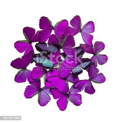 999676880 istock photo Purple butterflies isolated on white 1021347900