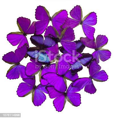 999676880 istock photo Purple butterflies isolated on white 1076114996