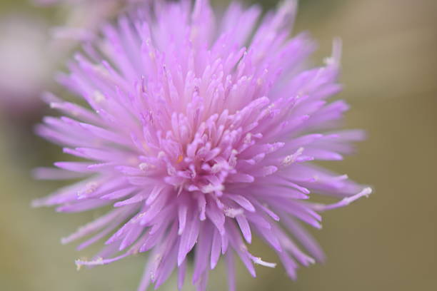 Top 60 Arizona Desert Flower Cactus Stock Photos Pictures And