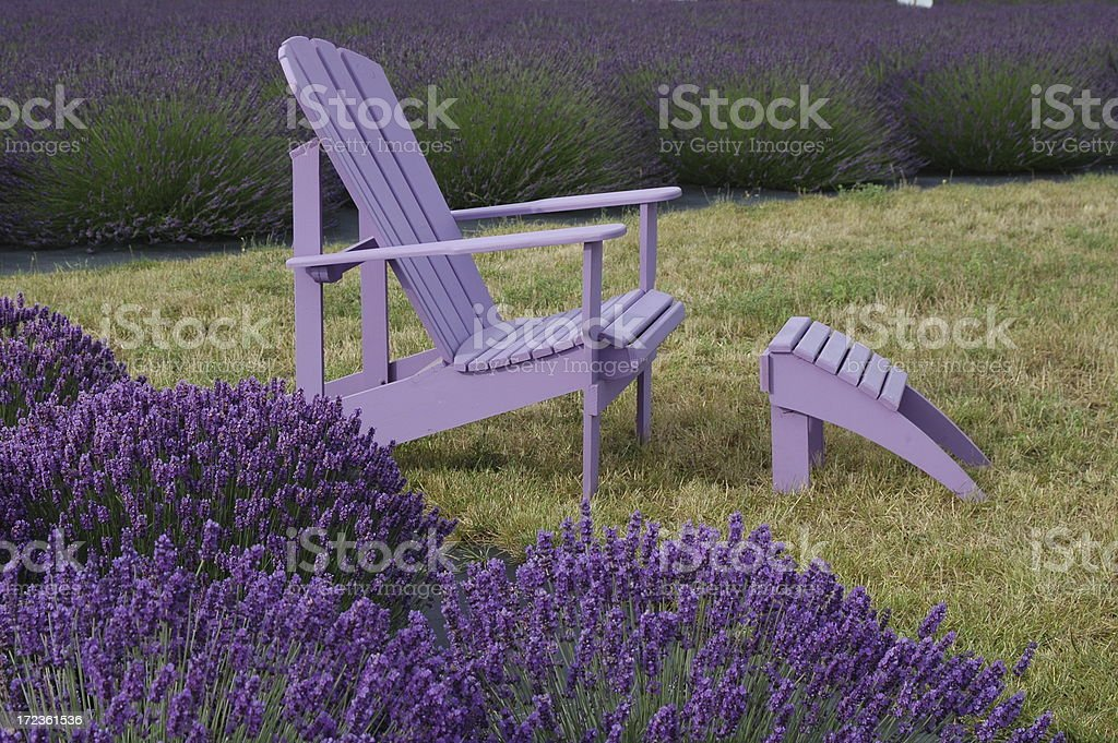 Purple Chair in Lavender royalty-free stock photo