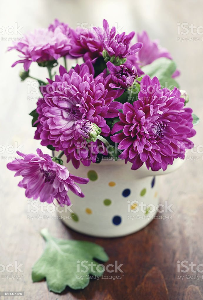 purple Chrysantheme Lizenzfreies stock-foto